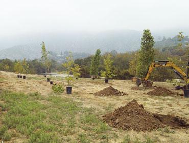 Mitigation Site Installation
