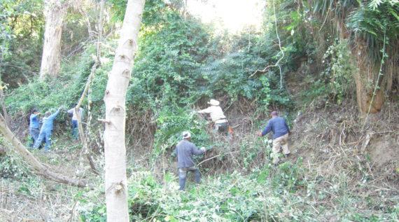 crews removing invasive plant species