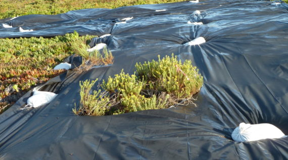 proting the environment with native planting