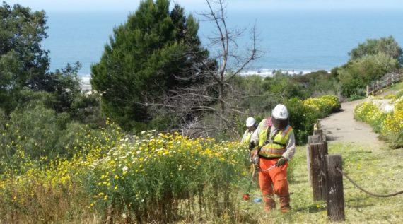 Ventura hillside weed abatement project